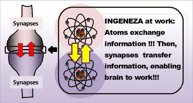 INGENEZA and synapses